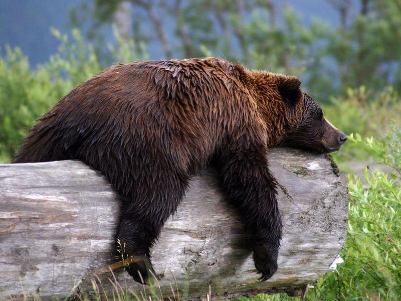Orso-stanco